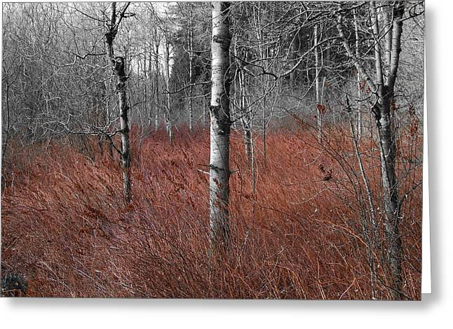 Winter Wetland Greeting Card