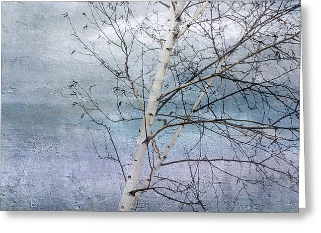 Winter White Birch  Greeting Card