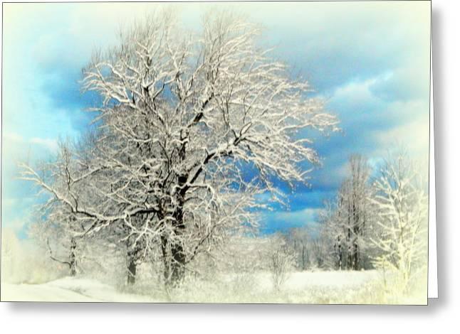 Winter White Greeting Card
