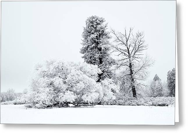 Winter White Greeting Card by Mike  Dawson