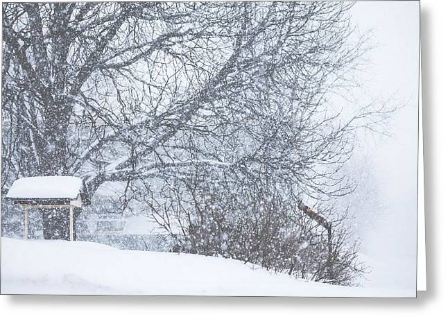 Greeting Card featuring the photograph Winter White Out by Robert Clifford