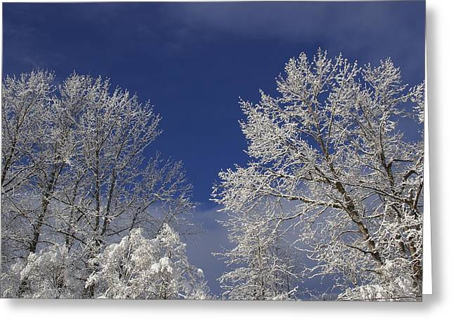 Greeting Card featuring the photograph Winter White by Sylvia Hart