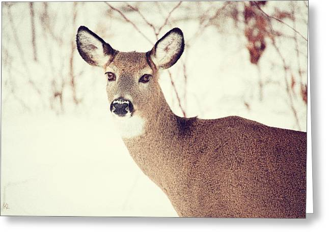 Winter White Tail Greeting Card by Karol Livote