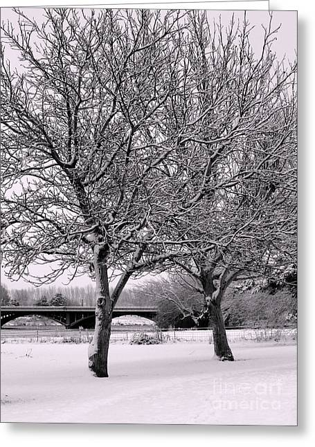 Winter White Trees Greeting Card by Carol Groenen