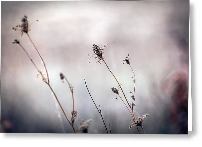 Greeting Card featuring the photograph Winter Wild Flowers by Sennie Pierson