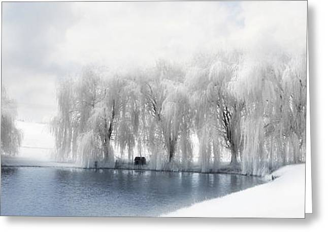 Winter Willows Greeting Card by Lori Deiter