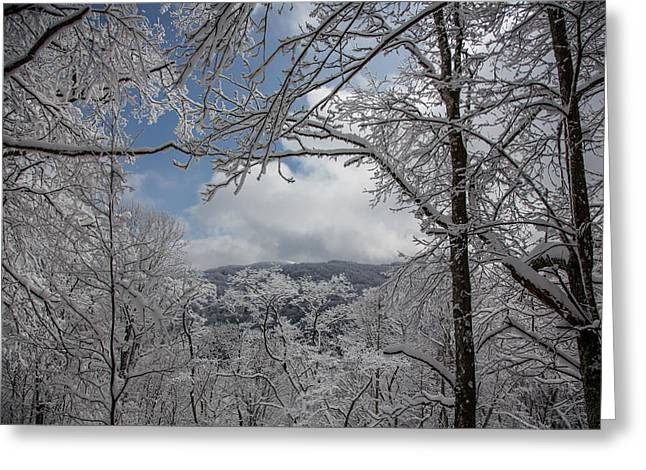 Winter Window Wonder Greeting Card by John Haldane