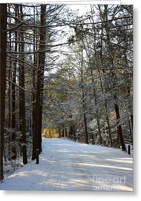 Winter Wonderland At Bigelow Hollow   Greeting Card