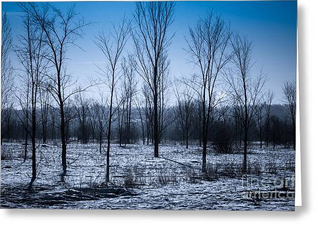Greeting Card featuring the photograph Winter Wonderland by Bianca Nadeau