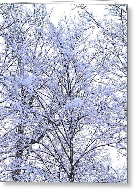 Greeting Card featuring the photograph Winter Wonderland by Candice Trimble