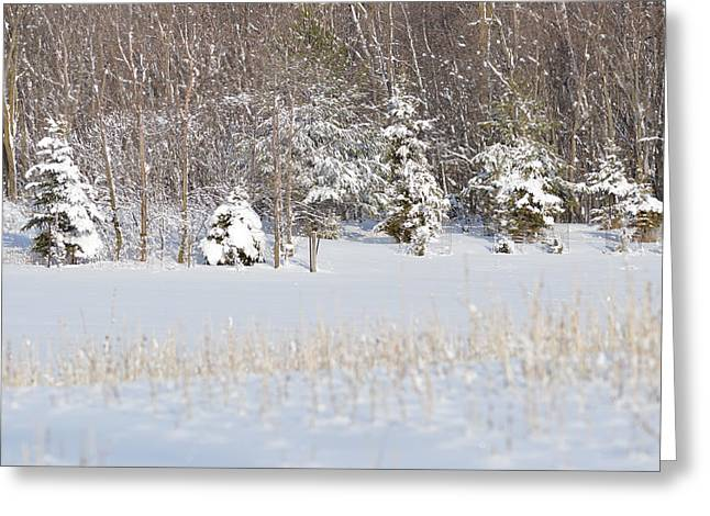 Greeting Card featuring the photograph Winter Wonderland by Dacia Doroff