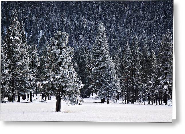 Winter Wonderland Greeting Card by Melanie Lankford Photography