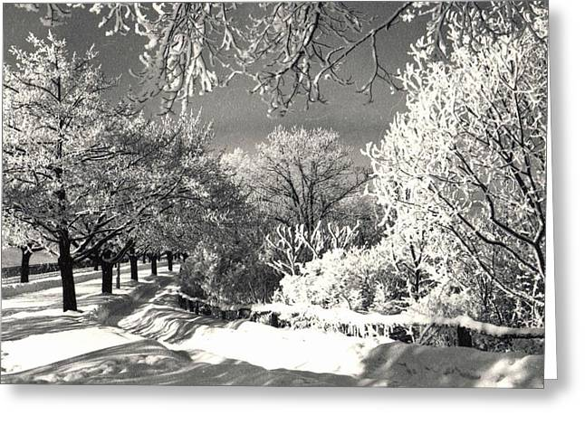 Winter Wonderland Greeting Card by Pat Mchale