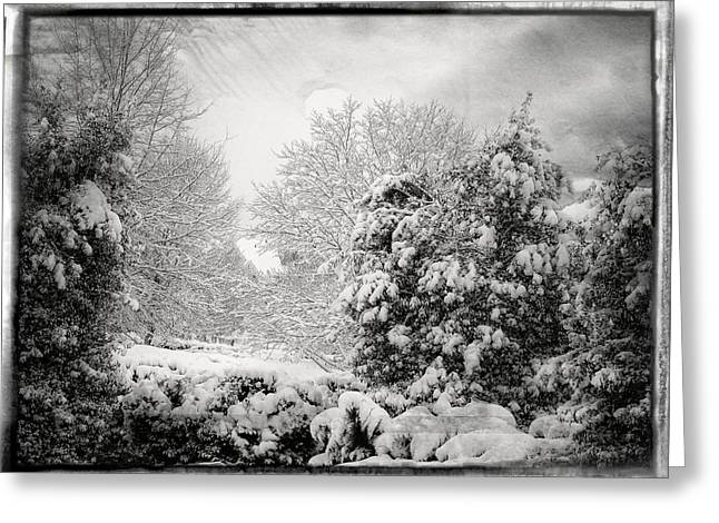 Winter Wonderland With Filmic Border Greeting Card
