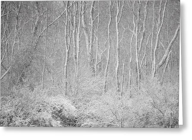 Winter Wood 2013 Greeting Card