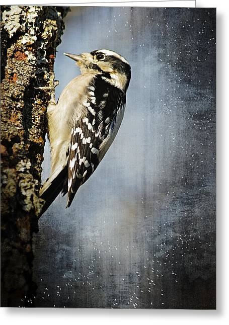 Winter Woodpecker Greeting Card