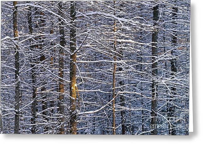 Greeting Card featuring the photograph Winter Woods by Alan L Graham