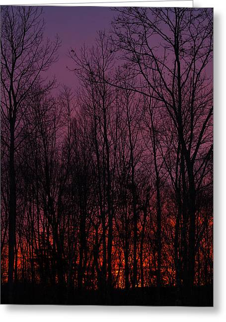 Winter Woods Sunset Greeting Card by Karol Livote