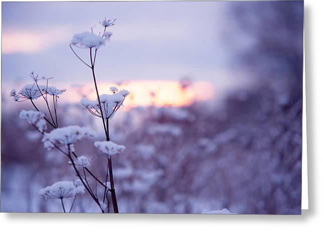 Winter Zen Greeting Card by Jenny Rainbow