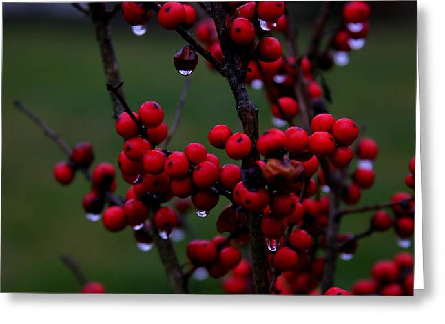 Winterberry Bush After The Rain Number 1 Greeting Card