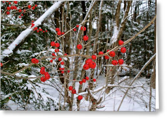 Winterberry Greeting Card