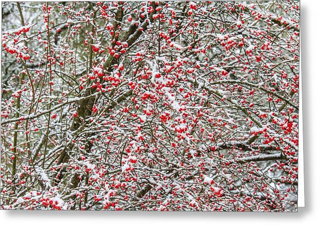 Winterberry During A Snowfall Greeting Card