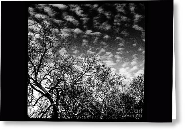 Winterfold - Monochrome Greeting Card