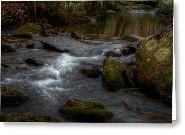 Wintergreen Stream Greeting Card