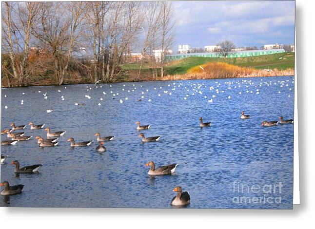 Greeting Card featuring the photograph Wintering Birds - Mayesbrook Park by Mudiama Kammoh