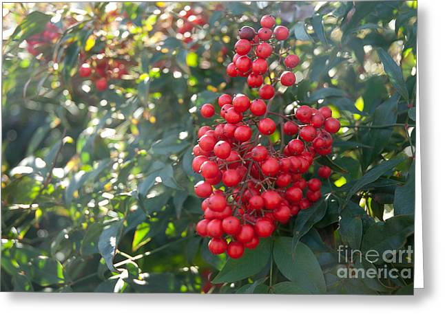 Greeting Card featuring the photograph Winter's Berries by Lena Wilhite