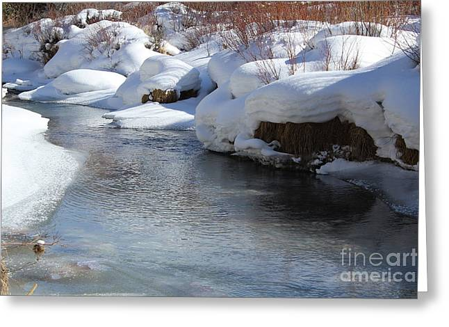 Winter's Blanket Greeting Card by Fiona Kennard