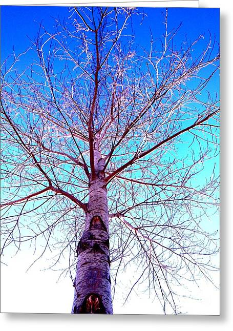 Winters Freeze Greeting Card by Sharon Costa