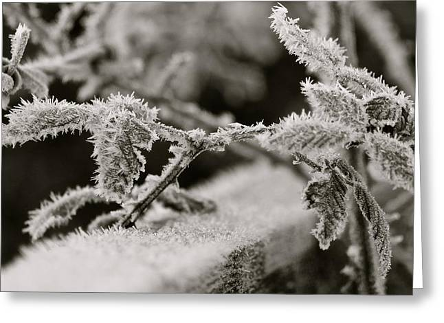 Winters Frost Greeting Card by Karen Grist