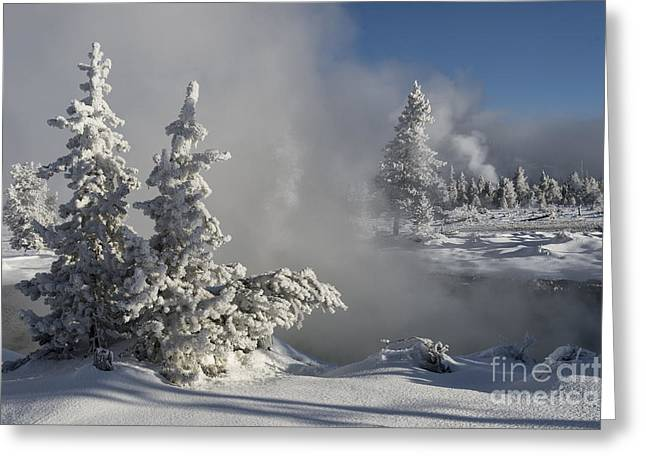 Winter's Glory - Yellowstone National Park Greeting Card by Sandra Bronstein