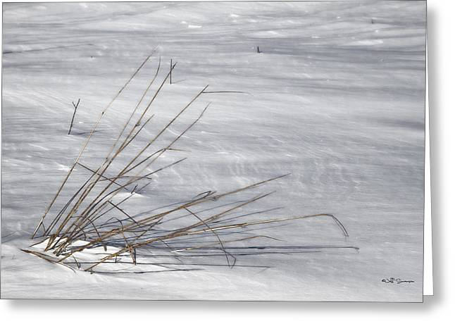 Winters Grasp Greeting Card by Jeff Swanson