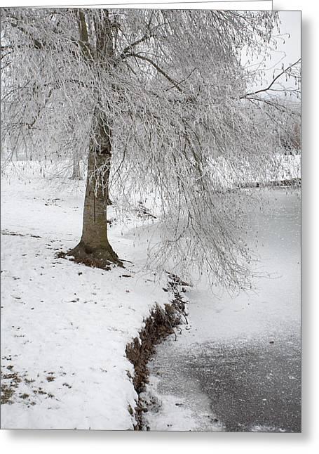 Winter's Grip Greeting Card