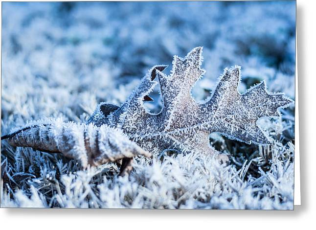 Winter's Icy Grip Greeting Card