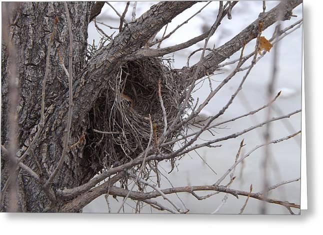 Winter's Nest Greeting Card
