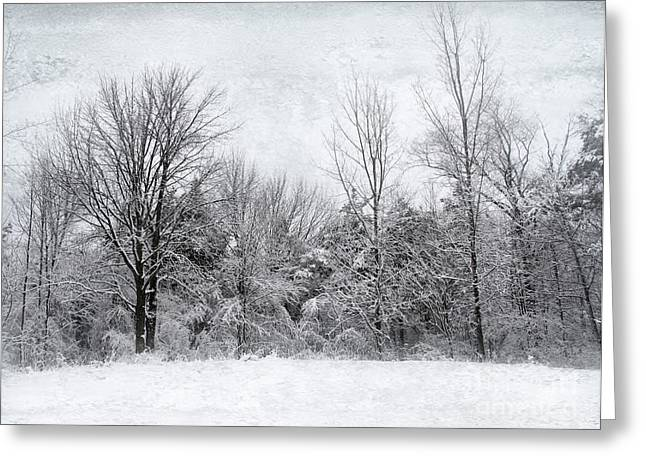 Winter's Wonder Greeting Card by Kathi Mirto