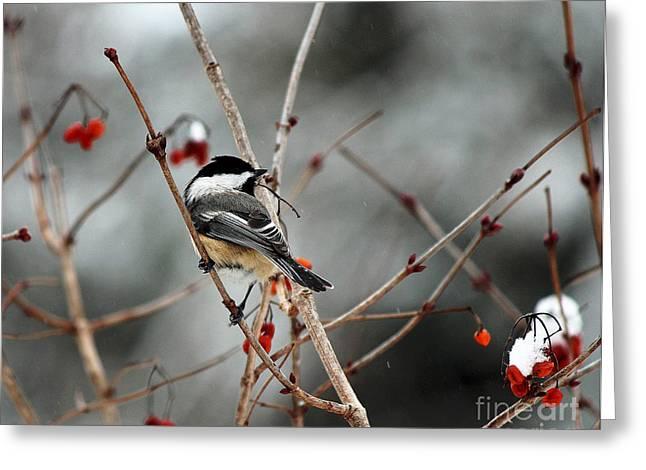 Wintertime Chickadee Greeting Card