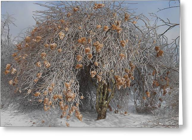 Wintertime Snowball Bush Tree Greeting Card