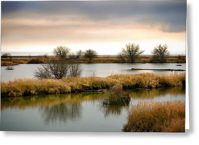 Greeting Card featuring the photograph Wintery Wetlands by Jordan Blackstone