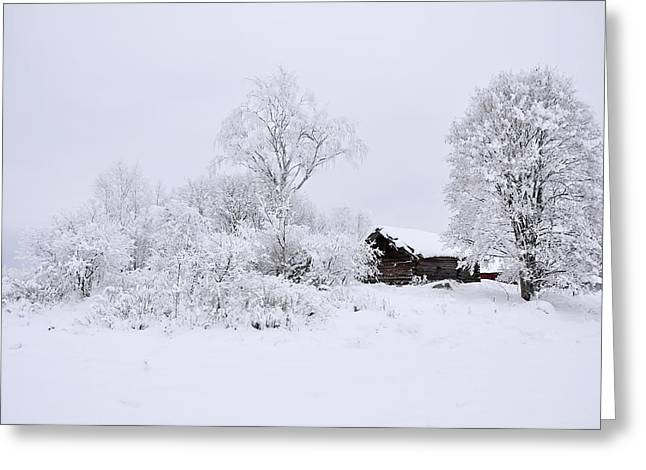 Wintry Landscape Greeting Card by Conny Sjostrom