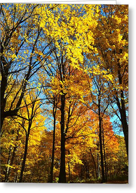 Wisconsin Fall Colors Greeting Card