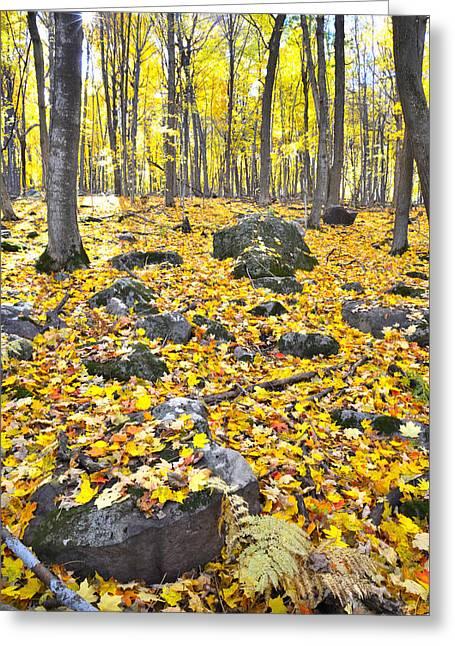 Wisconsin Sugar Maple Carpet Greeting Card