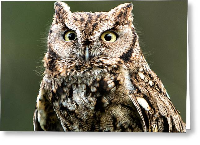 Wise Eyes Greeting Card by Mary Jo Allen