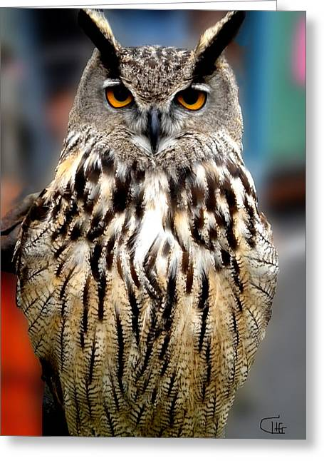 Greeting Card featuring the photograph Wise Forest Mountain Owl Spain by Colette V Hera  Guggenheim