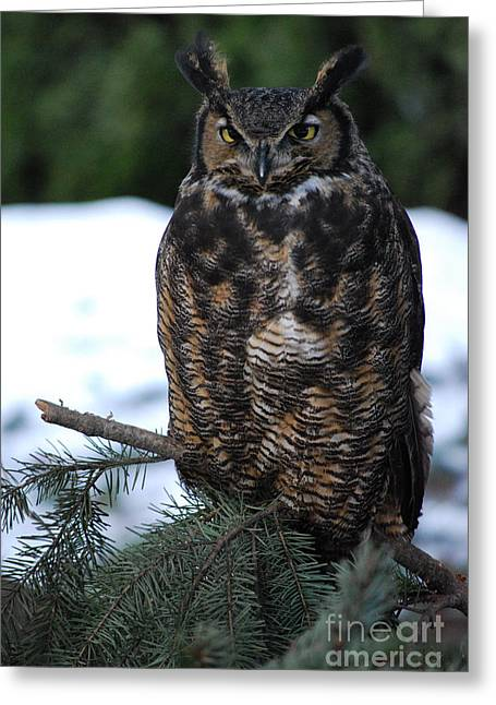 Wise Old Owl Greeting Card by Sharon Elliott