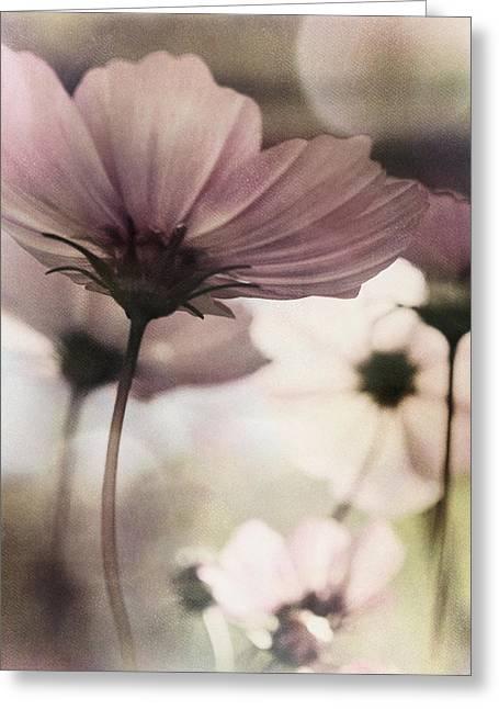 Wish Greeting Card by Darlene Kwiatkowski