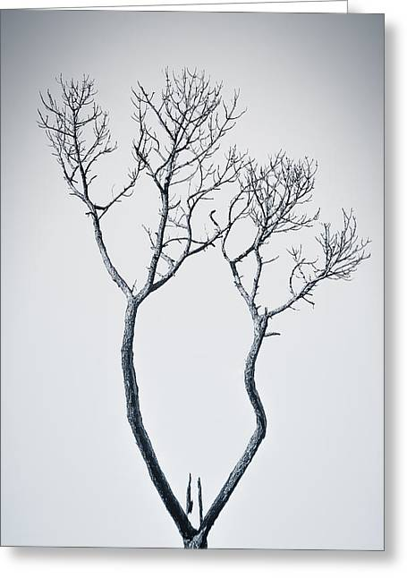 Greeting Card featuring the photograph Wishbone Tree by Carolyn Marshall